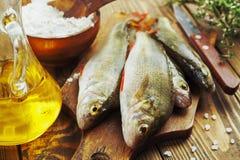 Perch, fish Royalty Free Stock Photo