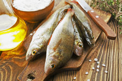 Perch, fish Stock Images