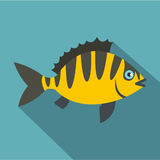 Perch fish icon, flat style. Perch fish icon. Flat illustration of perch fish vector icon for web  on baby blue background Stock Images