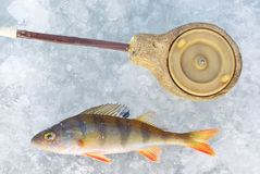 Perch fish with rod Stock Image