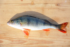 Perch fish on the wooden background Royalty Free Stock Images