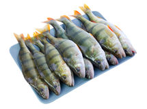Perch fishes on a plate Stock Images