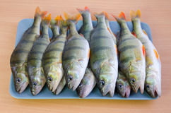 Perch fishes on a plate Stock Image