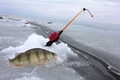 Perch fishing Stock Photo