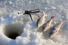 Perch fishing 6. Fishing on lake in -15 degrees (��) Celsius, 5 (F) Fahrenheit Royalty Free Stock Photography