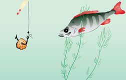 Perch fishing Royalty Free Stock Photo