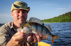 Perch fishing in summer lake Royalty Free Stock Photo
