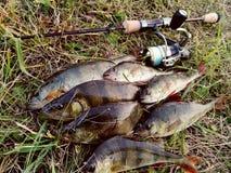 Perch fishing Stock Photo