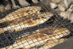 Perch fried on coals on the grill. Fish perch roasted on coals on the grill Stock Images