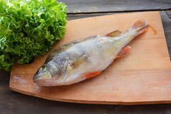 Perch with lettuce Stock Photo