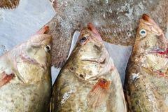 Perch (Perca fluviatilis) Stock Images