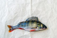 Perch on a piece of paper stock photos