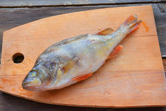 Perch. Raw fish (perch) on wooden background Royalty Free Stock Images