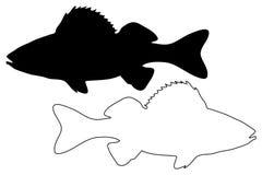 Perch silhouette vector. Perca fluviatilis Stock Photo
