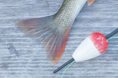 Perch tail closeup and an red float Stock Photos