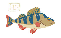 Perch, vector cartoon illustration Stock Photos