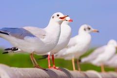 Perche d'oiseaux sur le pont en rail Photo libre de droits