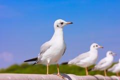 Perche d'oiseaux sur le pont en rail Image stock