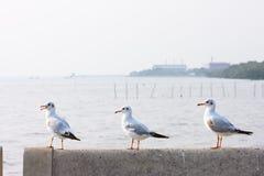 Perche d'oiseaux sur le pont en rail, fond, Photo stock