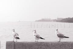 Perche d'oiseaux sur le pont en rail, fond, Image stock