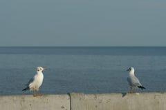 Perche d'oiseaux sur le rail de pont Photo stock