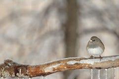 Perche de l'hiver Image stock