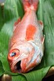 Perche de mer de Blackthroat, bar attrayant, poisson de première qualité japonais Photos libres de droits