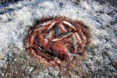 Perche de pêche de glace Images stock