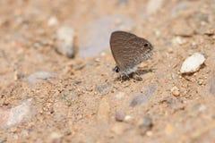 Perche de papillons au sol, Thaïlande Photographie stock