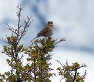 Perched Bird. Perched Bird at Perito Moreno Glacier, Parque Nacional Los Glaciares, Argentina Royalty Free Stock Photo