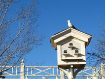 Perched on a Birdhouse. Pigeon sits on top of a white birdhouse stock images