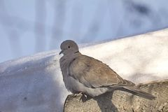 Perched dove Stock Photos