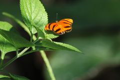 Perched orange butterfly Stock Images