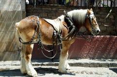 Perchero马在México 库存照片