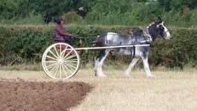 Percheron-Pferd an einem Arbeitstag-Land-Zeigung in England Lizenzfreie Stockbilder