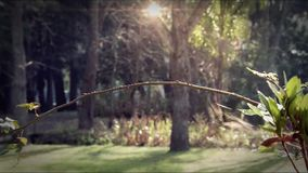 Perches de Colibri sur une branche de la forêt clips vidéos