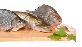 Perches and a pike on a board. Perches and a pike lie on a board Stock Image