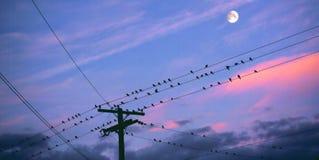 Perchia di tramonto Fotografia Stock