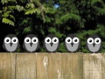 Perching Birds Royalty Free Stock Photo