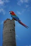 Perching parrot Stock Photo