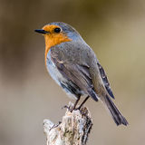 Perching Royalty Free Stock Images