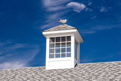 Perching Seagull in Maine Stock Photography