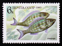 PerciformesPercomorphi, Acanthopteri från serie för matfisk, circa 1983 Royaltyfri Fotografi