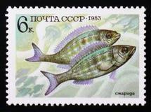 Percomorphi de Perciformes, Acanthopteri de série de poissons de nourriture, vers 1983 Photographie stock libre de droits