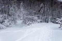 Percorsi bene viaggiati in neve immagini stock