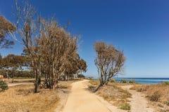 Percorsi della sporcizia dall'oceano Pacifico con gli alberi Fotografie Stock