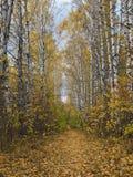 Percorsi di autunno Fotografie Stock Libere da Diritti