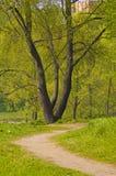 Percorsi di foresta Immagine Stock Libera da Diritti