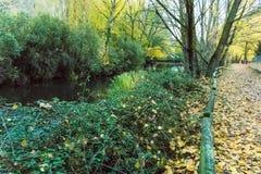 Percorso accanto al fiume coperto di foglie degli alberi fotografia stock