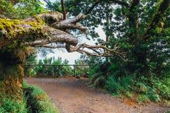 Percorso ai fontes di Levada das 25, isola del Madera, Portogallo della montagna Fotografia Stock